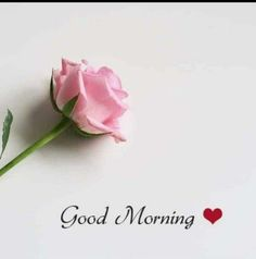 good morning wishes & good morning quotes ` good morning ` good morning quotes for him ` good morning quotes inspirational ` good morning wishes ` good morning beautiful ` good morning greetings ` good morning quotes funny Sweet Good Morning Images, Beautiful Morning Quotes, Good Morning Beautiful Flowers, Latest Good Morning Images, Good Morning Images Flowers, Special Good Morning, Morning Love Quotes, Good Morning Picture, Good Morning Love
