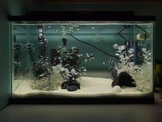 Black and White tank Fish Names Pet, Pet Fish, Small Fish Tanks, Cool Fish Tanks, Axolotl Tank, Fish Tank Themes, Fish Tank Terrarium, Goldfish Tank, White Gravel