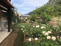Provence garden in Khaoyai Thailand Provence Garden, Dolores Park, Thailand, Sidewalk, Landscape, Travel, Scenery, Viajes, Side Walkway
