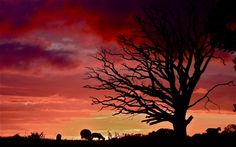 Sunset (by Pete Cooper, Romsey UK)