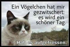 A bird chirped at me. It is going to be a fine day.  I already ate him.  Grumpy cat in German.