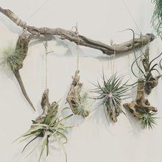 [PLANT ODD] Plant_ODD(플랜트오드)는 특별한 실내가드닝과 그린라이프스타일을 제안합니다.
