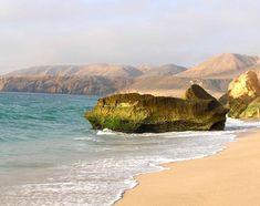 Ras al jinz flickr01 - Arabian Peninsula - Wikipedia