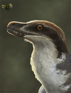 emily willoughby. yanornis. omnivore. avian. cretaceous. feathers.