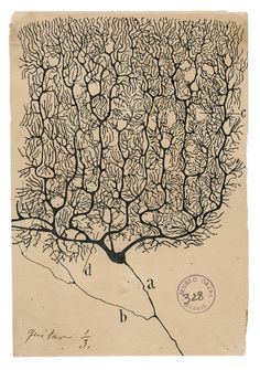 "The illustrations of Santiago Ramón y Cajal, the father of modern neuroscience, are featured in the new book ""The Beautiful Brain."""