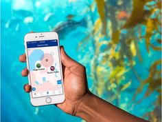 A monterey bay aquarium guest uses the map in the Monterey Bay Aquarium app