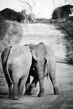 Kenya Photography, Kenya, Safari, Elephant, Baby Elephant, Fun, Playful, Wall Art by PhotosbyAnnaMarie on Etsy https://www.etsy.com/listing/220556256/kenya-photography-kenya-safari-elephant