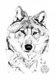 Les 87 Meilleures Images Du Tableau Dessins De Loups Sur Pinterest
