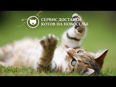 Banco presta dinero y gatos