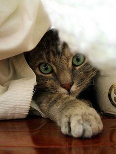 Soft paw