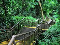 Trail at Mount Faber is a great place to visit in Singapore for free