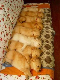 28 Cutest Puppy Pics Ever | Dropfacts | Page 21