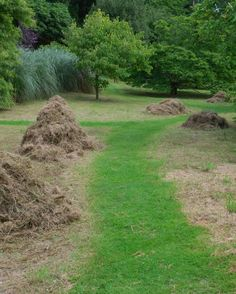 When we cut the #wildflower areas at #Glendurgan we rake up all the arisings and take them away to be composted. This leaves the nutrient levels in the wildflower areas low - good for the flowers and bad for grass, which is just the way we like it.