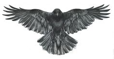Crow – Commission | Helen Lloyd Art                                                                                                                                                      More