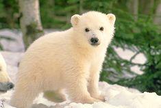 Polar Bear Cub in Forest « Orange Marmalade