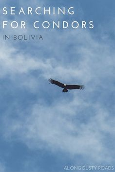 We set out on an off the beaten path adventure to try and find condors in Bolivia - what we discovered was one of the most magical experiences you can have in the country. Click on the pin to discover more.