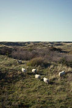 Sheep Photo by Jorinde Reijnierse