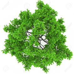 24 New Ideas tree png top view search Garden Trees, Trees To Plant, Tree Plan Photoshop, Tree Plan Png, Landscape Architecture, Landscape Design, Trees Top View, Christmas Tree Background, Pine Tree Tattoo