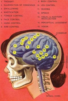 "Which activities are controlled by what areas of your brain?  ""Your Body"", A Ladybird Book. 1967.  Aurther: Amanda Jean"