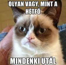 """Képtalálat a következőre: """"grumpy cat hungarian"""""""