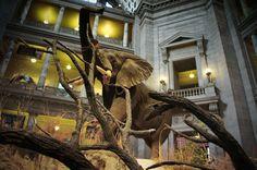 Weekend Inspiration - #Smithsonian Museum in Washington, D.C. on @2Rummage4