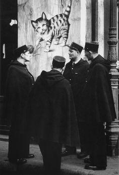 Le chat qui pelote Paris 1939 Photo: Brassai