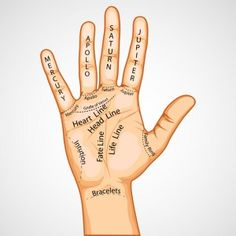Welcome to Psychic Library's Palmistry Room. Palmistry reveals individual personality and character traits through the study of the shape, size and lines of the hands and fingers. Hand Lines Meaning, Palmistry Reading, Mercury, Reading Specialist, Hand Shapes, Psychic Readings, Spirit Guides, Apollo, Astrology