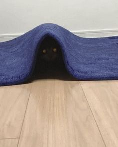 Cat from under Carpet