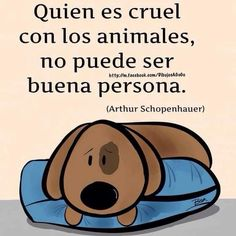 Whoever is cruel with animals, cannot possibly be a good person! Animals And Pets, Baby Animals, Cute Animals, Animal Quotes, Dog Quotes, Love Pet, I Love Dogs, Pet Puppy, Dog Cat