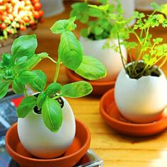 Start seedlings in an egg, and then you can plan them directly into the ground (or in a pot on the porch...)!
