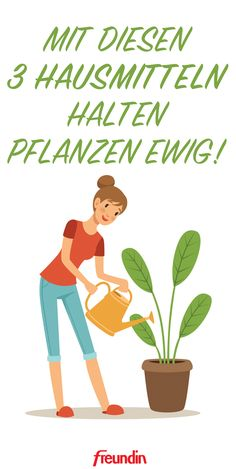 3 home remedies to keep your houseplants longer- 3 Hausmittel mit denen Ihre Zimmerpflanzen länger halten You do not have a green thumb? No problem! With these home remedies, houseplants will last forever -