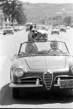 Black &  White retro car & dog