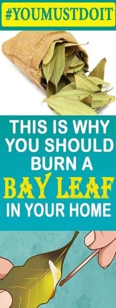 This is Why You Should Burn a Bay Leaf in Your Home Cove leaves have been utilized for thousands for a considerable length of time since they contain mitigating properties and can bolster assimilation and improve the respiratory framework too. Natural Excema Remedies, Natural Hemroid Remedies, Natural Remedies For Migraines, Natural Beauty Remedies, Herbalife, Quick Weight Loss Diet, Easy Weight Loss Tips, Lose Weight, Crossfit