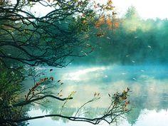 Natur photography