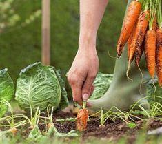 Ako získať z malej záhradky veľkú úrodu 1