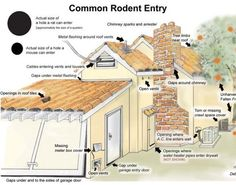 Getting rid of rats is not that easy. If you are figuring out how to get rid of rats in house, you have to come up with a plan studied to eliminate rats. Best Pest Control, Pest Control Services, Rat Control, Rat Infestation, Getting Rid Of Rats, Rat House, Bees And Wasps, Garden Guide, Humming Bird Feeders