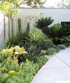 Xeric yard | The experts break it down for us.
