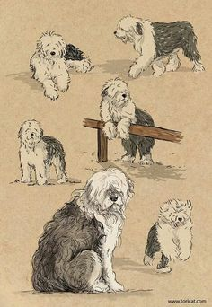 Sketches of Old English Sheepdogs Dog Illustration, Illustrations, Chien Bobtail, Old English Sheepdog Puppy, Dog Wallpaper Iphone, Dog Quotes Funny, Bearded Collie, Dog Tattoos, Dog Photography