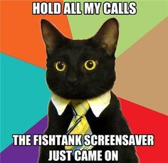 Can't get enough cat memes? Check out these hilarious, cute and silly cat memes we collected who show the best (and weirdest) cat traits that make these kitties our favorite fur-balls. Funny Shit, The Funny, Funny Cats, Funny Animals, Cute Animals, Cats Humor, Funny Happy, Humor Humour, Funny Stuff