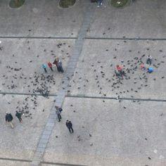 Enfants aux pigeons