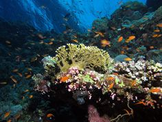 A view up the reef at Elphinstone Reef, Red Sea