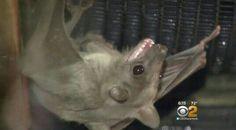 """Bat. """"Bats"""""""