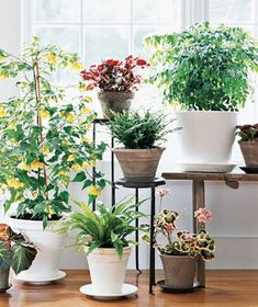 Container Gardening Tip: Always empty saucers after you water plants: Letting pots sit in water can damage roots.