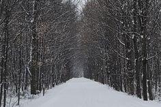 Bike Trails, Walking Trails & Trail Maps   TrailLink