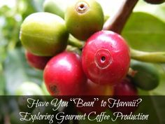 "Have You ""Bean"" to #Hawaii? Exploring Gourmet #Coffee Production << has anyone done this?  a coffee tour of Hawaii - what a great idea! (iced coffee at the beach for me please)"