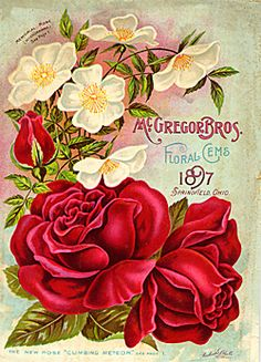 Catalog Information    Company Name:  McGregor Bros.    Catalog Title:  Floral Gems (1897)  Publication Information:  Springfield, OH  United States  Category(ies) of Cover Art:  Roses