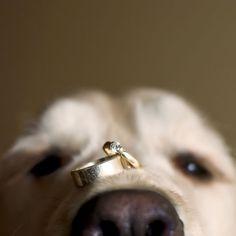 9 Wedding Ring Photos That Shine …