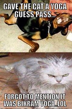 09a9fe41d4a88d986a499a647adac172 cats humor yoga memes (yogamemes) on pinterest,Hot Yoga Meme