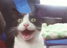 Cat Car GIF - Cat Car Excited - Discover & Share GIFs