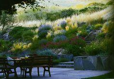 hillside landscape by Lenkin Design